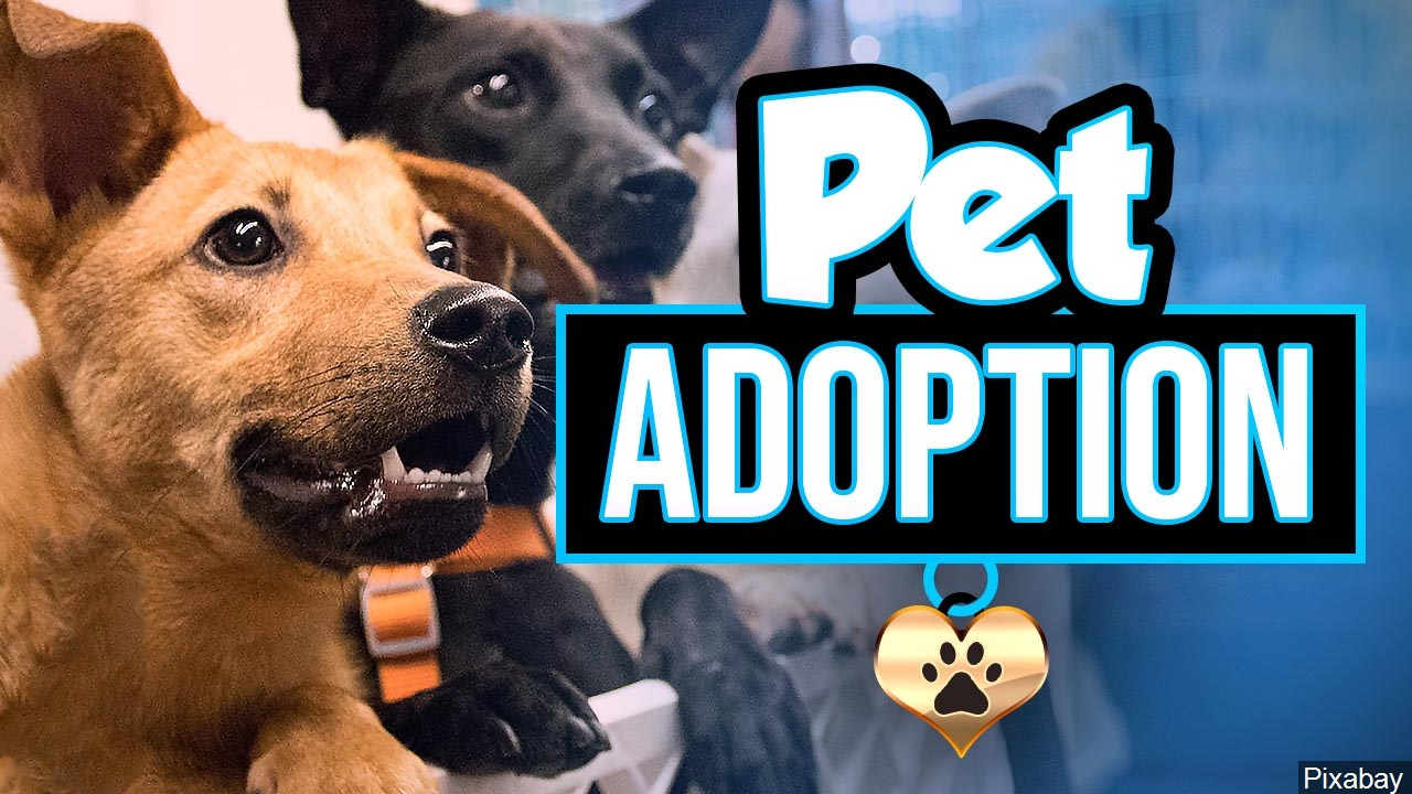 Pet Adoption Graphic, Two Dogs