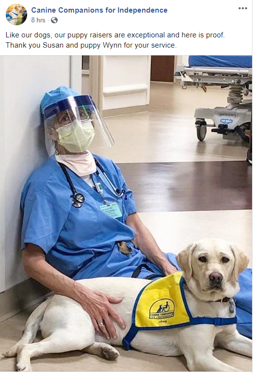Therapy Dog And Doctor